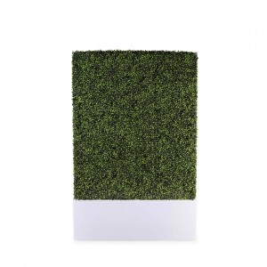 Prosecco Illuminated Boxwood Front1